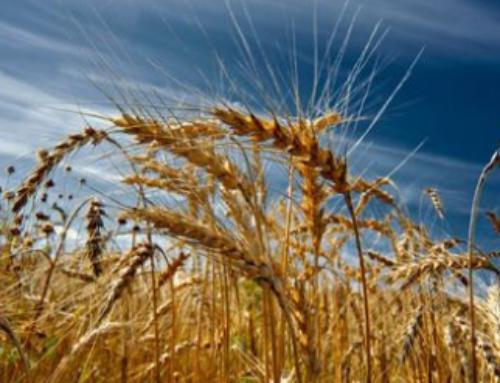 Husk det nu: Tilsætning af antioxidant omkring høst