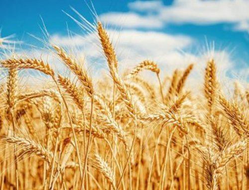 Husk analyser af ny høst