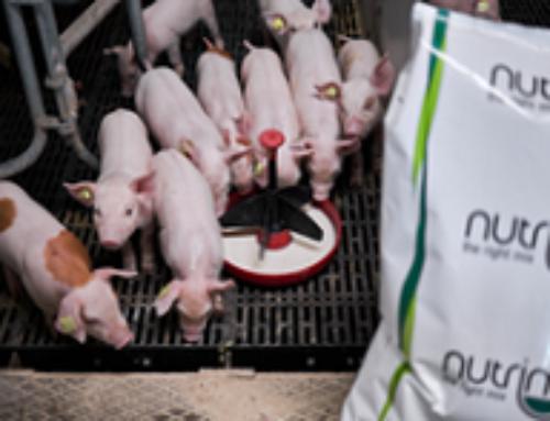 Når grisen er sendt på slagteriet, æder den ikke mere foder