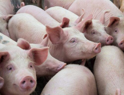Fokus på poltefodring ved årets foderseminar